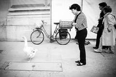 the Goose on the Street (joaobambu) Tags: street city people urban bw woman white black branco germany mnchen different strasse pb preto goose gans sidewalk rua starting munique