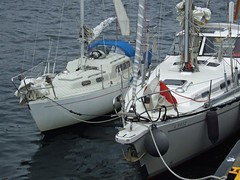 Smallest competitor (nz_willowherb) Tags: see scotland boat flickr tour vessel visit shetland mainland to go berganrace visitshetland seeshetland goptoshetland