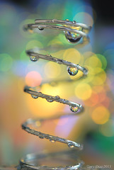 Wet spring (Tony Dias 7) Tags: macro wet mondays