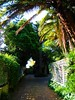wm47_sydney_08 (WM47) Tags: art beach bondi skyline zoo graffiti coconut sydney australia koala harborbridge amaze beastman streeetart horphe ontre tagspalmtrees