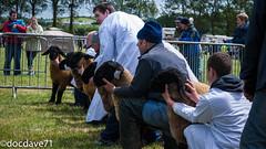 corksummershow (228 of 722).jpg (docdave71) Tags: pictures show ireland summer sun dogs cows sheep cork competition bulls fotos gambar bilder billeder الصور immagini kuvat 2013 εικόνεσ