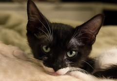 fonzi 020 (praline3001) Tags: pet cute cat photography kitten louisiana feline neworleans playful aforable