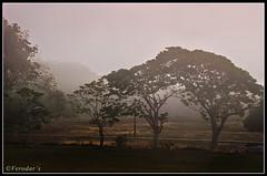 Semangar (VERODAR) Tags: morning trees nikon johor daybreak kotatinggi malayvillage nikond5000 verodar veronicasridar semangar kampungsemangar