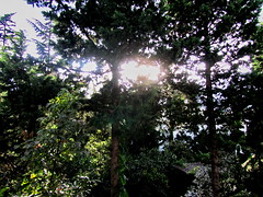 Sun behind the trees ! ( !) Tags: trees light sunset shadow sky cloud sun tree nature back vernal