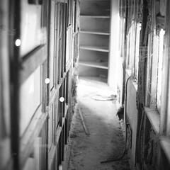 te atreves a atravesarlo atrevido (anteojosnegrosdecarey) Tags: street railroad white black film argentina analog photography 50mm nikon exposure kodak f14 trix 400 multiple f4 transtation primes 2013