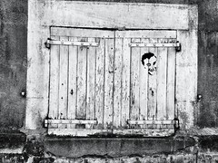 24-08-13- Un homme  la fentre (marisan67) Tags: street black detail photographie noiretblanc nb 365 rue dtail iphone clich instantan 2013 365project iphone4 iphonography iphonegraphy iphonographer iphonographie iphoneographie