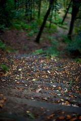 Steps (kokeshidol) Tags: autumn trees green 50mm nikon dof bokeh d600