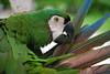 Putzi (Freedee-7815) Tags: putzen papagai