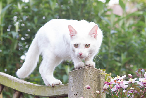 White Beauty Visiting