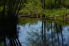 Pitt Polder (Ian Threlkeld) Tags: canada nature nikon bc natural britishcolumbia pittmeadows pittpolder beautifulbc d7000