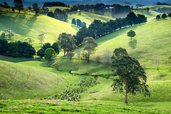 Coastal Valley (laurie.g.w) Tags: trees sunset shadow green grass rural creek landscape south hill australia victoria farmland coastal valley gippsland headwaters