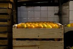 Mercado Municipal Paulistano | Laranjas (Eduardo Maida) Tags: brazil orange color colors cores saopaulo market sopaulo laranja mercado oranges crates laranjas bigmarket mercado caixotes mercadodesopaulo brazilianmarket mercadopaulistano
