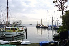 Green boat ( Annieta ) Tags: annieta november 2016 sony a6000 nederland netherlands orchideenhoeve luttelgeest vlinder butterfly papillon mariposa allrightsreserved usingthispicturewithoutpermissionisillegal o