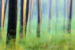 Aquesta color s la dels fruits que pengen de l'arbre assolellat (txutis de can burrass) Tags: landscape paisaje landas landes tree rbol trees rboles bosque wood amanecer sunrise nikon tamron