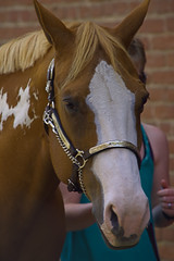 A Horse Of Course (swong95765) Tags: horse animal head eyes looking ears alert watching