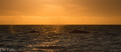 Fin whales at sunset (ellie.taylor30) Tags: california america nikonnaturephotography flickrnature nature