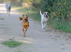 _F014614 (b.kunst17) Tags: nikon nikkor d3s 70200 vrii hund hunde tier tiere haustier haustiere animal animals dog dogs pet pets