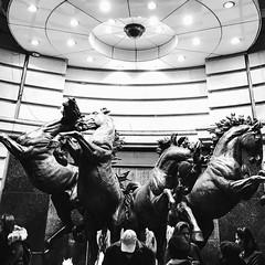 #london #hourse #hourses #sculpture (yasuhisa) Tags: httpswwwinstagramcompbmdrxclgnfh london hourse hourses sculpture httpsscontentcdninstagramcomt51288515sh008e3514712046191317271312723988333723554414592njpgigcachekeymtm3mdeyotqzodg5mjy3ntm5oq3d3d2