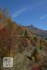 161103y (finalistJPN) Tags: autumncolors autumnsky daylight sunshine clearsky presentingpicturesandphotos ppap discoverjapan nationalgeographic discoverychannel japanguide traveljapan visitjapan drive stockphotos