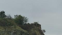 Die Bastei auf dem Rotenfels