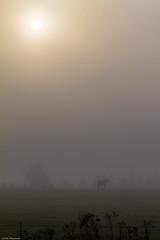Spooky Morning (eaglekepr) Tags: hdr fog horse photography sky sun weather wildlife canoneos7d ef100400mmf4556lisusm