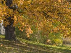 Enjoying the Fall Colors on Djurgrden (PriscillaBurcher) Tags: autumn fall stockholm djurgrden l1000757