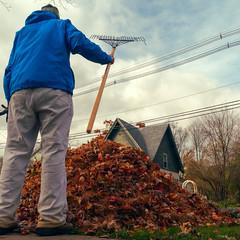 Rake a mighty pile of leaves (Thiophene_Guy) Tags: thiopheneguy xz1 olympusxz1 originalworks ironphotographerchallenge utata:project=ip242 forcedperspective