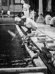 (C-47) Tags: inde india canon eos 400d bw blackwhite ablution jamamasjid newdelhi group people life scene scne vie everyday animals water pigeons flying birds 18200mm
