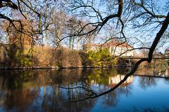 Harmony in urban environment (Maria Eklind) Tags: harmony fotosondag bridge nature water spegling city outdoor harmoni canal tree bro sweden kanal fs161120 park harmoniistadsmilj malm reflection kungsparken skneln sverige se