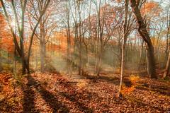 Wandering (patkelley3) Tags: fall sunset rays gold orange autumn