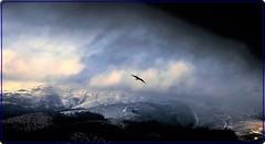 Where Eagles Dare (2) (Ioan BACIVAROV Photography) Tags: early november bucegi carpathians mountains romania landscape panorama tree autumn trees forest sky cloud clouds excellent beautifullandscape eagle bacivarov ioanbacivarov bacivarovphotostream interesting beautiful wonderful wonderfulphoto nikon