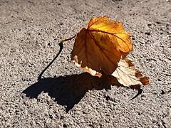 1 Taking a Final Bow (Mertonian) Tags: autumn fall season3 finalbow bow acedia melancholy texture curvy mertonian robertcowlishaw canon powershot g7x mark ii canonpowershotg7xmarkii interesting cement concrete awe beauty wonder blues winterblues shadow light