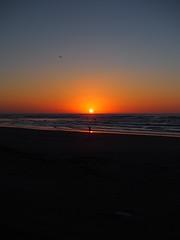 the sun set into the ocean (murozo) Tags: sunset sun coast kisakata nikaho akita japan beach winter sea ocean bird 日没 夕日 象潟 海岸 砂浜 にかほ 秋田 日本 海 日本海 鳥
