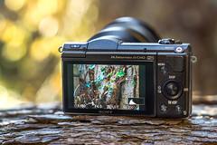 My backup cam SONY 5100 (ILCE-5100) (.: mike | MKvip Beauty :.) Tags: sony5100 sonyilce5100 sonyalpha5100 sonyalpha sony alpha emount 5100 ilce5100 sony6000 sonyilce6000 sonyalpha6000 6000 ilce6000 primelens prime manualexposure manual samyangfe50mm14asifum samyangfe50mm14 samyangfe50mmf14 samyang 50mm 14 aspherical umc af handheld availablelight naturallight backlight backlighting shallowdof bokeh bokehlicious beyondbokeh extremebokeh smoothbokeh gearshot cameraporn wrthamrhein maximiliansau grtzingen berghausen karlsruhe germany europe mth mkvip samyangfe50mm14asifumcaf