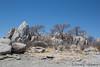33-Botswana_2016 (Beverly Houwing) Tags: africa baobab botswana boulders desert kalahari kubuisland makadigkadipans rocks saltpan tree