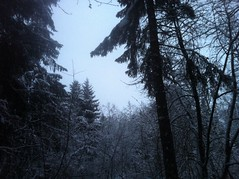 Lost in the Woods (a.tee) Tags: winter tree snow blue outdoor nature
