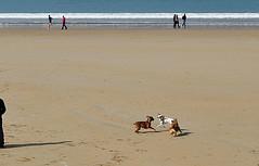 Libertad (oscura12) Tags: libertad san playa perros donostia sebastin