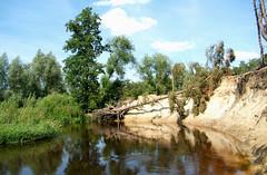 Twente, een door rivier-erosie omgevallen boom, Overijssel juli 2007 (wally nelemans) Tags: holland river nederland thenetherlands july erosion juli twente overijssel 2007 erosie rivier dinkel
