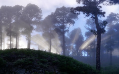 Misty Forest (Pit Stterlin) Tags: panorama tree landscape lapalma