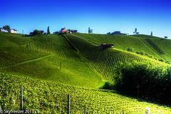 Vineyard (Markus T. Berger  www.mtberger-photography.com) Tags: landscape austria amazing wine hill vine steiermark weinberg styria glanz wineroad winehills winehill weinstrase glanzanderweinstrase skyfreezer