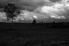 (seeingthrough) Tags: white storm black nature germany dark landscape fotografie natur wiese landschaft schwarz dunkel sturm phography unwetter weis