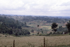 Kenya Highlands, Nairobi - Naivasha Road, Sep 1980, Kenya img268 (Hart Walter) Tags: tourism coffee cattle rice tea goats sunflower sisal camels sugarcane deforestation desertification tef africanlanduse baobabdestruction