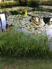 Lilies (sewonandon) Tags: reflection pond lilies