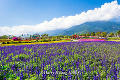 Harry_10008,,,,,,,,,,,,,,,,, (HarryTaiwan) Tags: taiwan    d800                  harryhuang    hgf78354ms35hinetnet