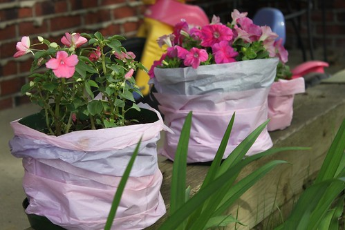 Impatiens and Petunias