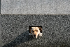 Friend * (HarQ Photography) Tags: dog friend fujifilm xe1 bestcapturesaoi elitegalleryaoi xf55200mm
