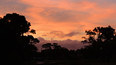 June 7, 2013 Sunset (Jim Mullhaupt) Tags: trees sunset wallpaper silhouette clouds sunrise palms colorful flickr florida tropical storms bradenton mullhaupt jimmullhaupt