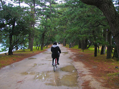 1955 Biking Across the Bridge to Heaven (mari-ten) Tags: park people tree nature bicycle japan cycling kyoto walkway  kansai 2010 actionshot  amanohashidate eastasia miyazu    18 leizel bridgetoheaven  201003 20100323 seishun18travel