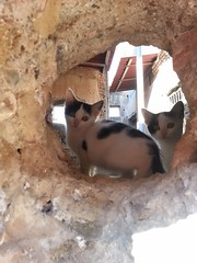 Kittens (Meikon Art) Tags: italy cats rome roma art cat europe italia kittens antica kitties ostia ostiaantica