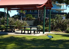 Redcliffe Beach,Queensland (scinta1) Tags: beach brisbane queensland redcliffe 2013